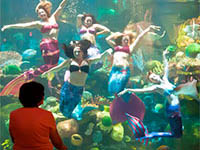 The aquarium at silverton hotel coupons discounts for Discount aquarium fish and reef